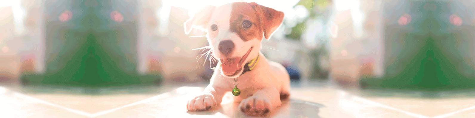 Adoptar a una mascota en cuarentena se ha convertido en una decisión muy común en varias partes del mundo. Te aconsejamos sobre el mejor animal de compañía para ti