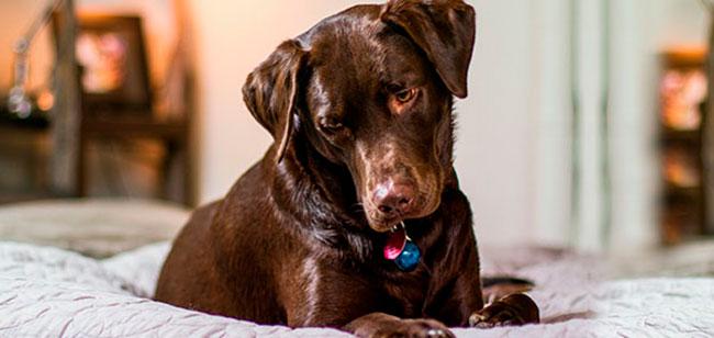Humanizar a las mascotas